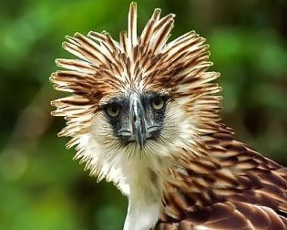 The Philippine Eagle Nature Center